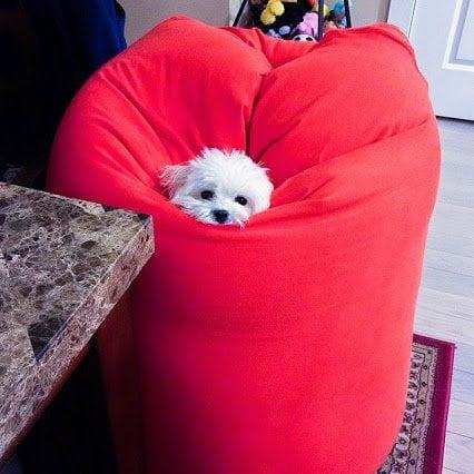 yogibo dog