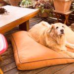 大型犬用ヨギボーベッドのドギボー