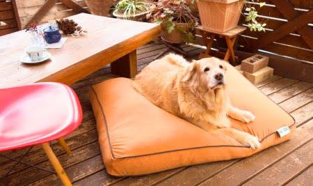 犬用ヨギボーベッドのドギボー