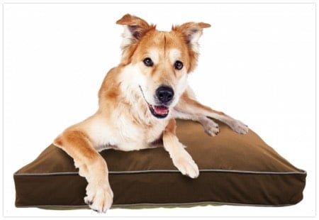 中型犬用ヨギボーベッドのドギボー