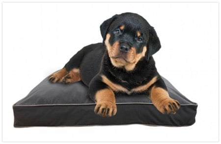 小型犬用ヨギボーベッドのドギボー