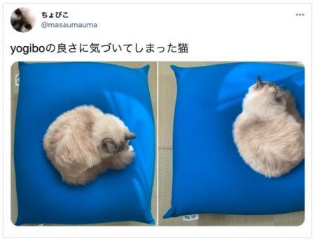 ヨギボーミニでダメになる猫