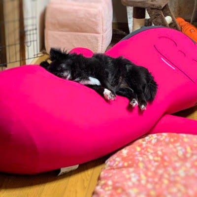 ヨギボーのキャラクタービーズソファ「ハギボー(Hugibo)」でダメになる犬