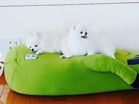 ハギボー(Hugibo)でくつろぐペットの犬
