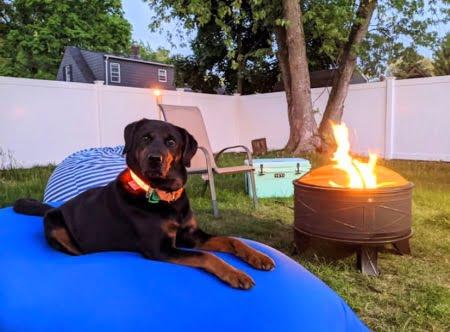 お庭でヨギボーズーラソファでダメなる犬